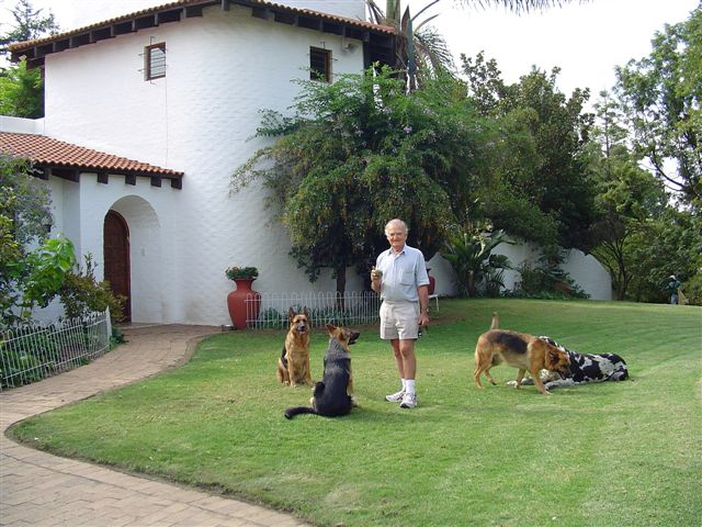house and dogs
